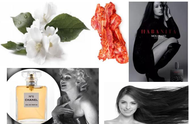 Curiosidades sobre perfumes e fragrâncias