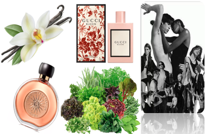 Top5 Tendências de perfume feminino em 2018