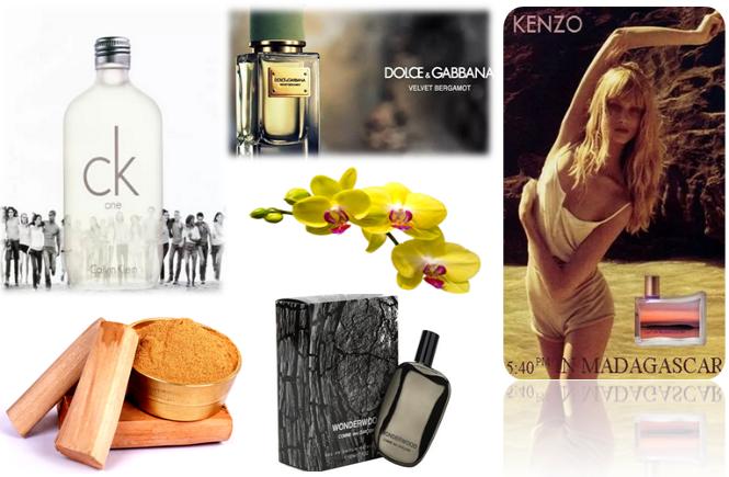 melhores perfumes unissex